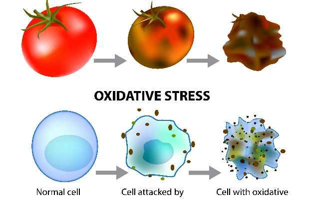 ऑक्सीडेटिव तनाव